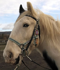 George - one of the Cranleigh RDA ponies