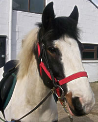 Rafferty a Cranleigh RDA Pony